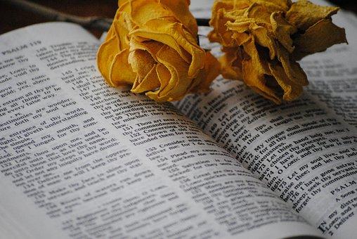 Rose, Bible, Book, Religious, Religion, Church, Holy