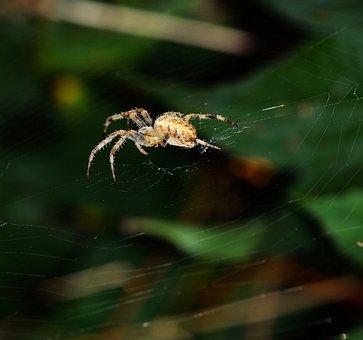 Spider, Spider Nest, Wait, Prey, Hunter, Patience