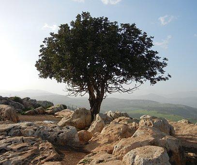 Tree, Lonely, Rocks, Stones, Rocky, Grounds, Landscapes