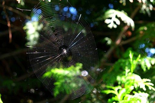 Cobweb, Spider, Close Up, Nature, Insect, Web, Macro