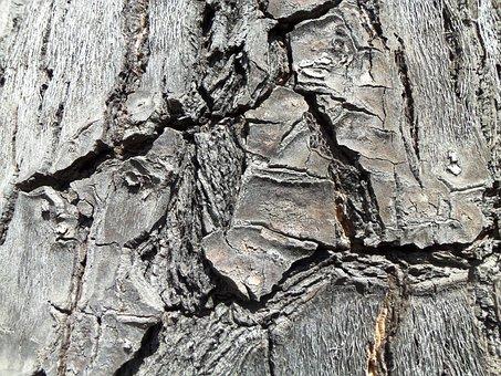 Wood, Cracks, Vegetation, Tree, Trunk, Nature, Bark