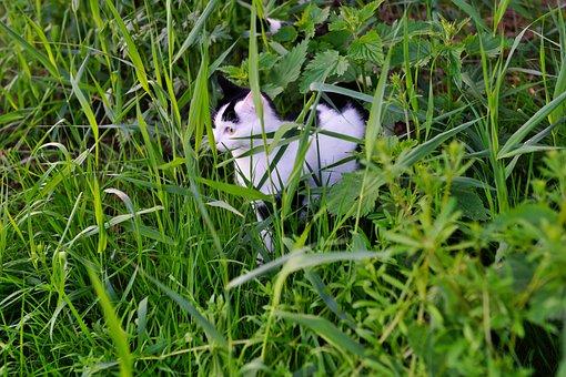 Cat, Hidden, Lauer, Curious, Attention, Mieze, Fur
