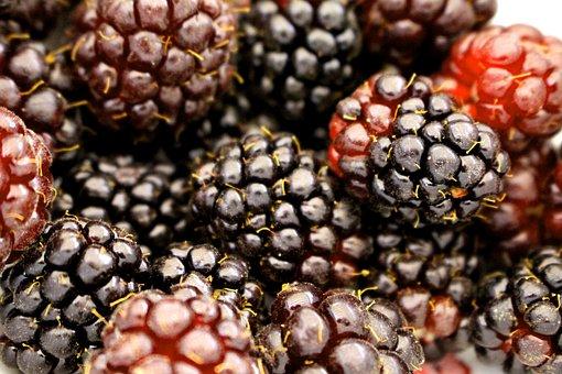 Berry, Boysenberry, Blackberry, Food, Fruit, Fresh