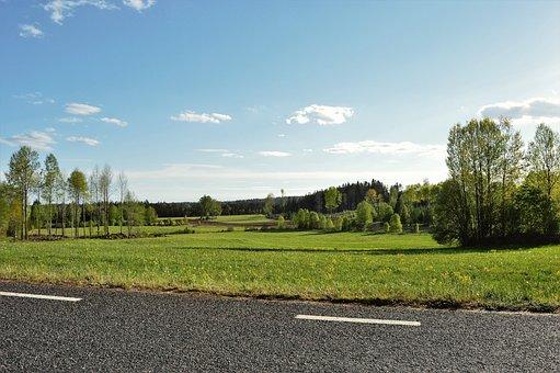 Road, Bed, Grass, Green, Blue, Summer, Himmel, Tree