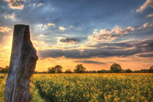 Sky, Oilseed Rape, Field Of Rapeseeds, Clouds, Wood
