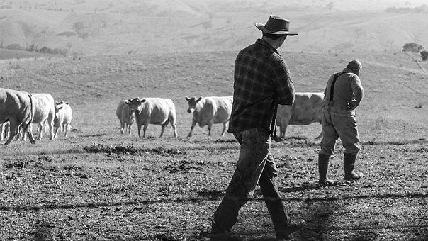 Farmers, Farm, Farming, Rural, Field, Man, Cow