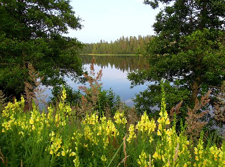 Lake, Antirrhinum, Yellow, Flowers, Forest, Trees