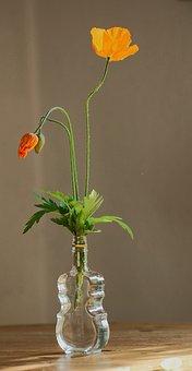 Poppy, Poppy Flower, Flowers Spring, Red, Orange Three