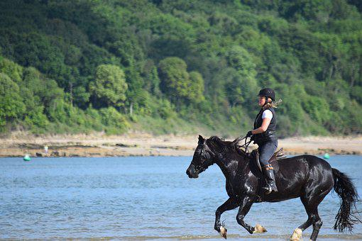 Horse, Sea, Rider, Horseriding, Beach, Animal, Water