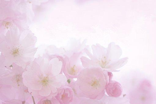 Pink, Blossom, Bloom, Spring, Romantic, Summer