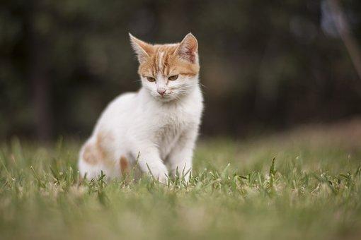 Cat, Animal, Kitten, Cute, Pets, Animal Portrait