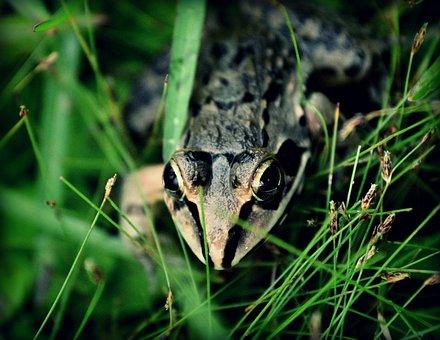 Frog, Ecosystem, Eco