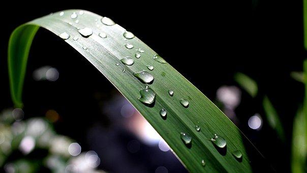 Rain, Leaf, Pond, Reflections, Iris, Calm, Light, Sun