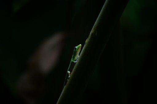 Gecko, Hawaii, Island Of Hawaii, Reptiles, Colorful