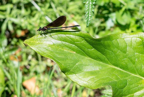 Damsel Fly, Leaf, Insect, Nature, Green, Fly, Damselfly