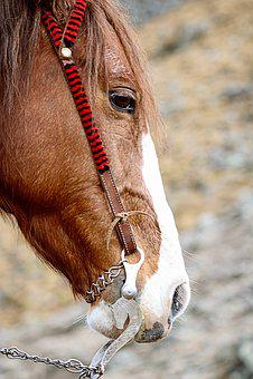 Horse, Burden, Animal, Domestic, Outdoors
