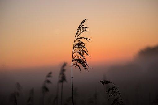 Sunrise, Reed, Shadow, Mood, Atmospheric, Morning Mist