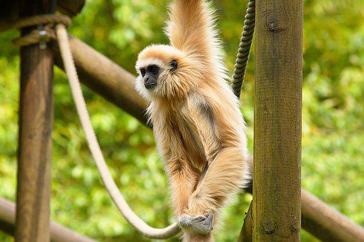 Monkey, Enclosure, Open, Nature, Animal World, Zoo