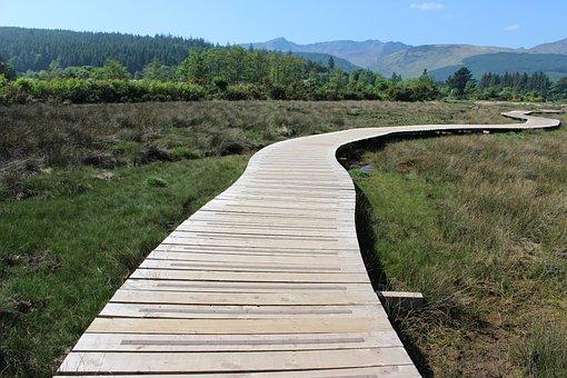 Arran, Path, Way, Wood, Trail, Walk, Nature, Swamp