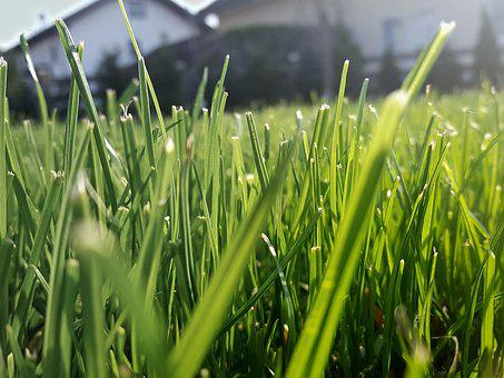 Grass, Rush, Green, Blade Of Grass, Ecology, Meadow