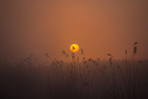 Sunrise, Spring Lake, Mood, Reed, Nature Conservation