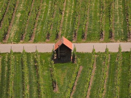 Vineyard, Vineyard Cottage, Vines, Wine, Top View