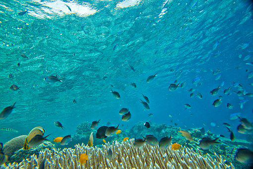 Underwater, Small Fish, Coral, Tropical, Widi Islands