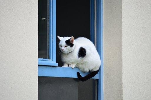 Cat, Window, Black And White Cat, House, Blue, Feline