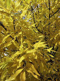 Australia, Autumn, Tree, Leaves, Cobram Victoria