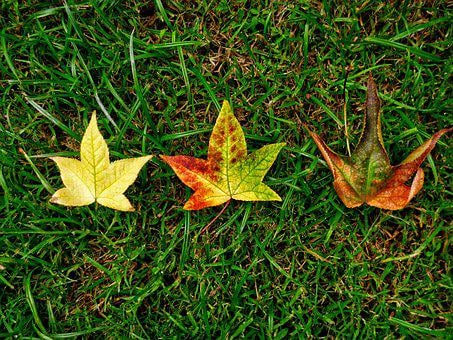 Autumn, Leaves, Tree, Yellow, Nature, Lawn, Leaf, Green