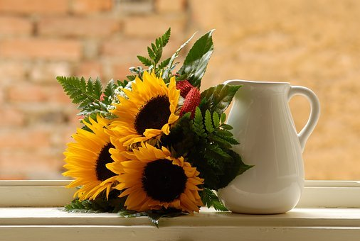 Window, Sunflower, Pitcher, Morning