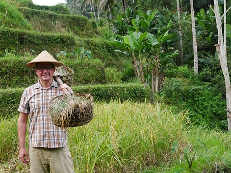 Indonesia, Bali, Rice Terraces, Rice Cultivation, Paddy