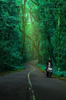 Forest, The Tree, Green, Road, Road In The Forest