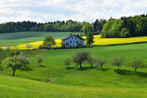 Oilseed Rape, Spring, Yellow, Landscape
