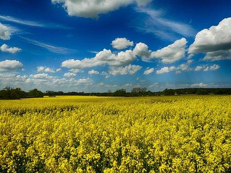 Rape Blossom, North-west Mecklenburg, Summer
