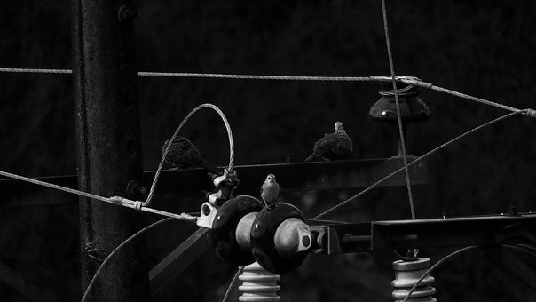 Birds, Pigeons, Black And White, Background, Wallpaper