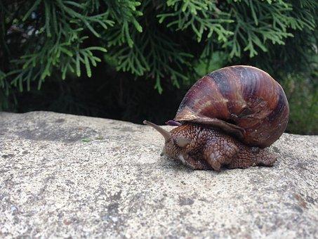 Snail, Creeps, Slimy, Wildlife, Closeup, Macro, Slug