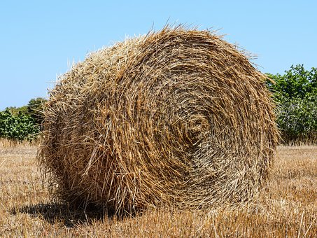 Hay Ball, Hay, Forage, Dry Grass, Agriculture, Rural