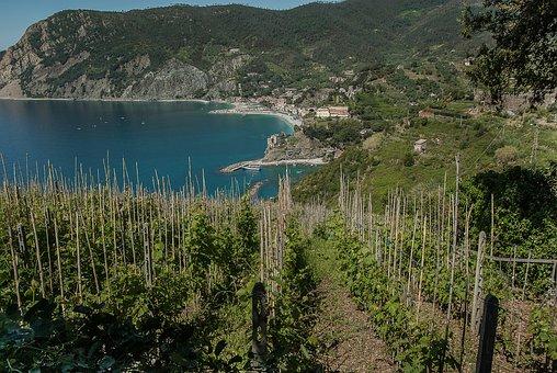 Italy, Cinque Terre, Monterosso, Vines, Port