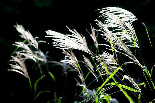 Reed, Riverside, Autumn, Pool, Break, Scenery, Nature
