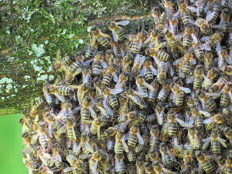 Bees, Hive, Insect, Nature, Summer, Fly, Beekeeping