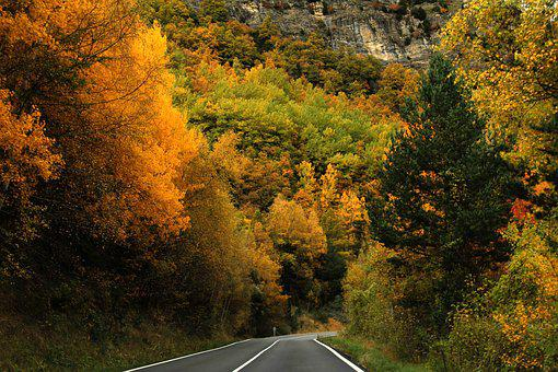 Forest, Trees, Autumn, Nature, Road, Colors, Leaves
