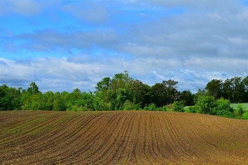 Farmland, Spring, Planting, Nature, Rural, Plant