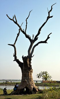 Tree, Decaying, Ubein, Bridge, Mandalay, Myanmar, Wood