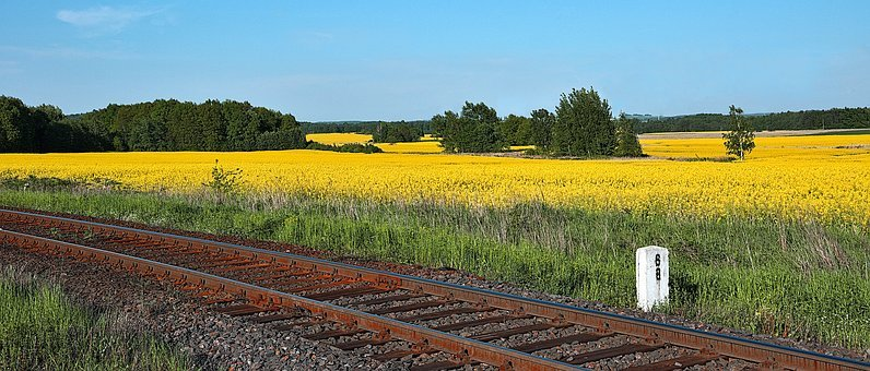 Tracks, Railway, Rapeseed, Energy, Fuel, Alternative