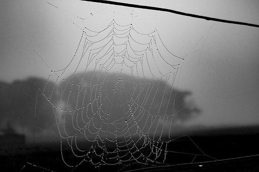 Spiderweb, Black And White, Halloween, Web, Cobweb, Net