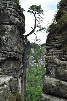 Saxon Switzerland, Tree, Individually, Stones, Cliffs