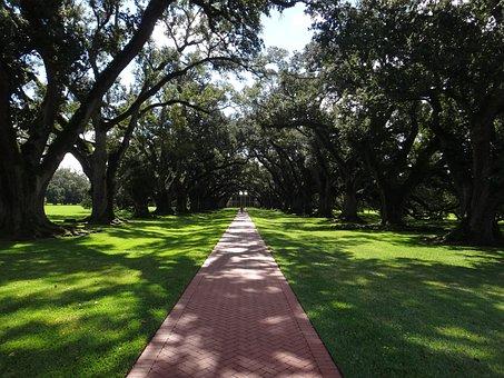 Avenue, Away, Cotton Farm, Cotton Farmers