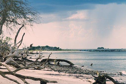 Beach, Driftwood, Storm Clouds, Water, Landscape, Shore