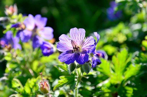 Flower, Nature, Light, Reverse Light, Blue, Plant